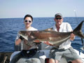 Peter's Cobia